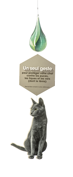 chat russian blue